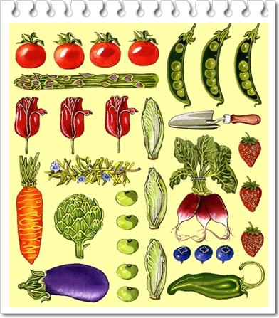 TomatoAsparagusTulips